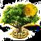 acacia xxl.png