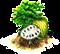 albero di Graviola.png