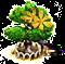 Albero di ylang-ylang XL.png