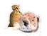boxfish_feed.png