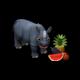 breedingaug2019rhino1_big.png