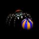 breedingmar2019spider1_big.png