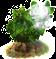 cottonwood_upgrade_0.png