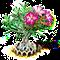 desertrose_upgrade_1.png