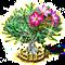 desertrose_upgrade_2.png