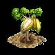 kapoktree_upgrade_0_big.png