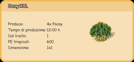 pacay xxl.png