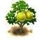 pomelo.png