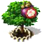 purplemangosteen_upgrade_1.png