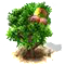 soapberry_upgrade_0.png
