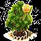 tuliptree_upgrade_1.png
